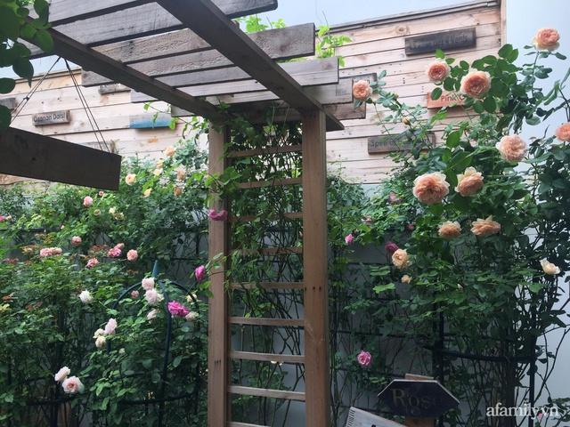 Vườn hồng rực rỡ tỏa sắc hương trước sân nhà đón hè sang của cặp vợ chồng trẻ Sài Gòn - Ảnh 3.