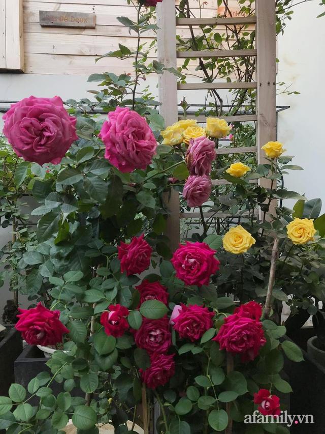 Vườn hồng rực rỡ tỏa sắc hương trước sân nhà đón hè sang của cặp vợ chồng trẻ Sài Gòn - Ảnh 21.