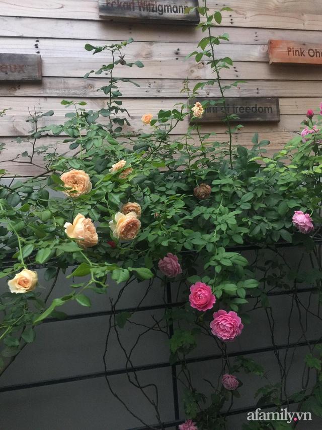 Vườn hồng rực rỡ tỏa sắc hương trước sân nhà đón hè sang của cặp vợ chồng trẻ Sài Gòn - Ảnh 22.