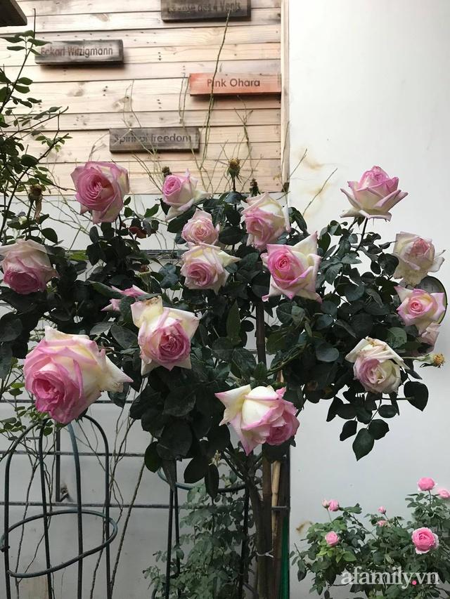 Vườn hồng rực rỡ tỏa sắc hương trước sân nhà đón hè sang của cặp vợ chồng trẻ Sài Gòn - Ảnh 23.