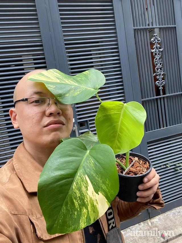 Sở hữu những chậu cây kiểng lá có tổng giá trị vài trăm triệu, chàng trai Sài Gòn tiết lộ thú vui đắt đỏ và những vấn đề người tập chơi nên biết - Ảnh 5.