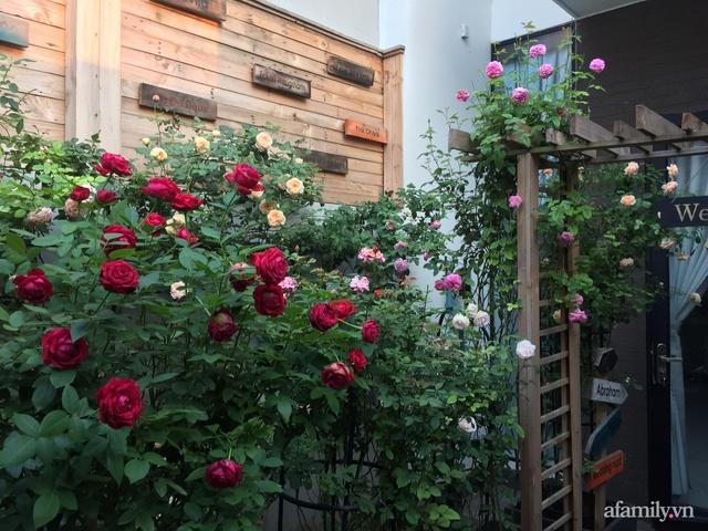 Vườn hồng rực rỡ tỏa sắc hương trước sân nhà đón hè sang của cặp vợ chồng trẻ Sài Gòn - Ảnh 5.