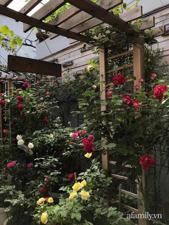 Vườn hồng rực rỡ tỏa sắc hương trước sân nhà đón hè sang của cặp vợ chồng trẻ Sài Gòn - Ảnh 8.
