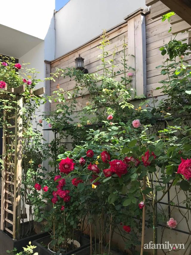 Vườn hồng rực rỡ tỏa sắc hương trước sân nhà đón hè sang của cặp vợ chồng trẻ Sài Gòn - Ảnh 10.