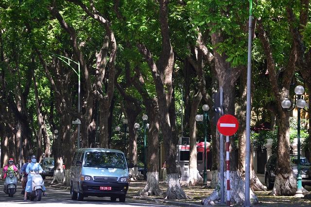 Phố Phan Đình Phùng không chỉ là đẹp lãng mạn mà còn là con đường râm mát nhất Thủ đô - Ảnh 5.