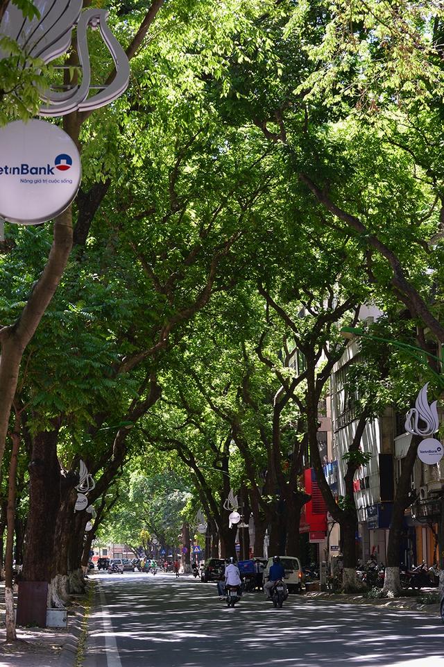 Phố Phan Đình Phùng không chỉ là đẹp lãng mạn mà còn là con đường râm mát nhất Thủ đô - Ảnh 11.