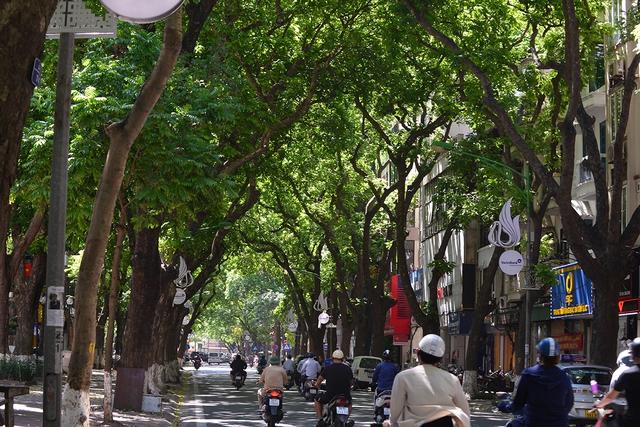 Phố Phan Đình Phùng không chỉ là đẹp lãng mạn mà còn là con đường râm mát nhất Thủ đô - Ảnh 2.
