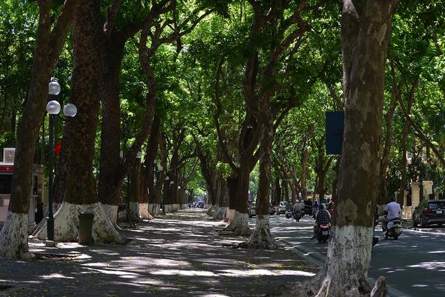 Phố Phan Đình Phùng không chỉ là đẹp lãng mạn mà còn là con đường râm mát nhất Thủ đô - Ảnh 3.