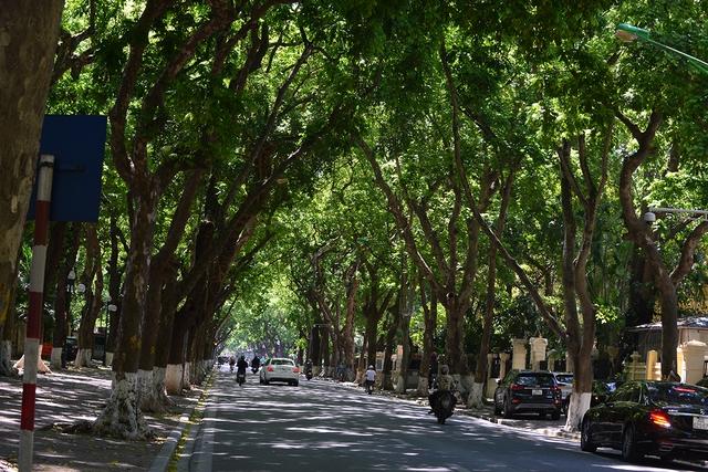 Phố Phan Đình Phùng không chỉ là đẹp lãng mạn mà còn là con đường râm mát nhất Thủ đô - Ảnh 6.