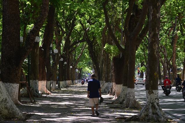 Phố Phan Đình Phùng không chỉ là đẹp lãng mạn mà còn là con đường râm mát nhất Thủ đô - Ảnh 4.