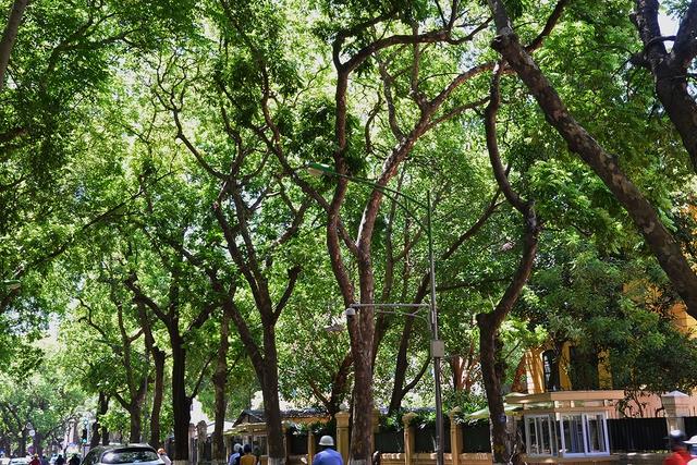 Phố Phan Đình Phùng không chỉ là đẹp lãng mạn mà còn là con đường râm mát nhất Thủ đô - Ảnh 10.