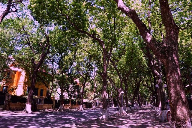 Phố Phan Đình Phùng không chỉ là đẹp lãng mạn mà còn là con đường râm mát nhất Thủ đô - Ảnh 9.