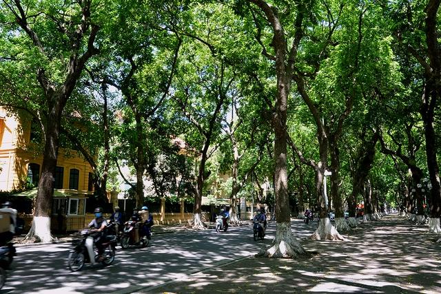 Phố Phan Đình Phùng không chỉ là đẹp lãng mạn mà còn là con đường râm mát nhất Thủ đô - Ảnh 7.