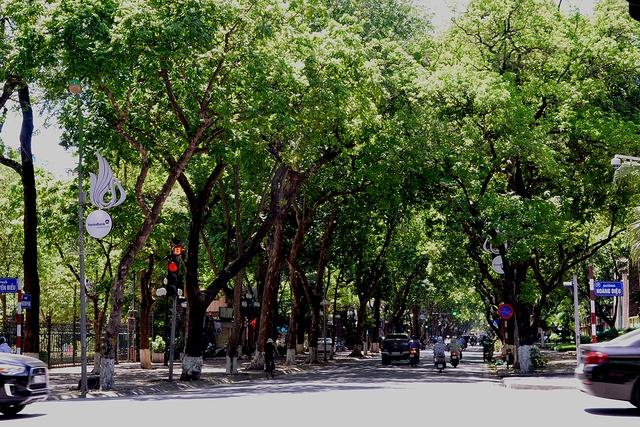 Phố Phan Đình Phùng không chỉ là đẹp lãng mạn mà còn là con đường râm mát nhất Thủ đô - Ảnh 12.