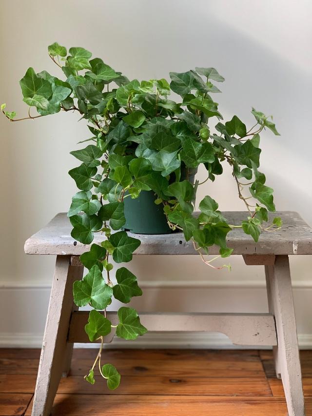 12 loại cây cảnh được NASA gợi ý nên trồng trong nhà để lọc không khí và cải thiện sức khỏe - Ảnh 1.
