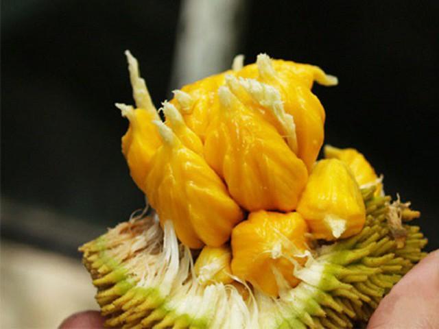 4 loại quả rừng giá chát vẫn được lùng mua - Ảnh 9.