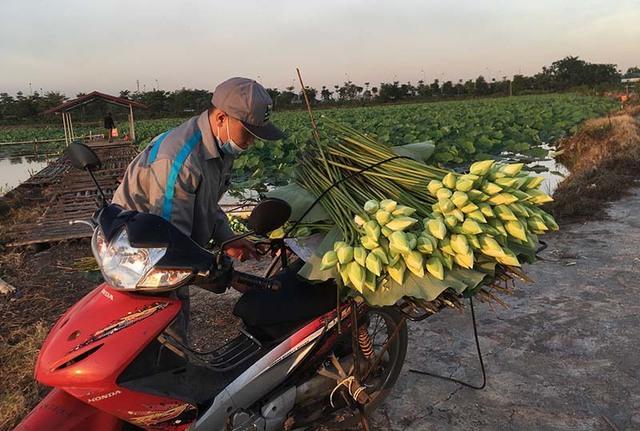 Kỷ lục triệu bông hoa sen của anh nông dân Hà Nội - Ảnh 5.