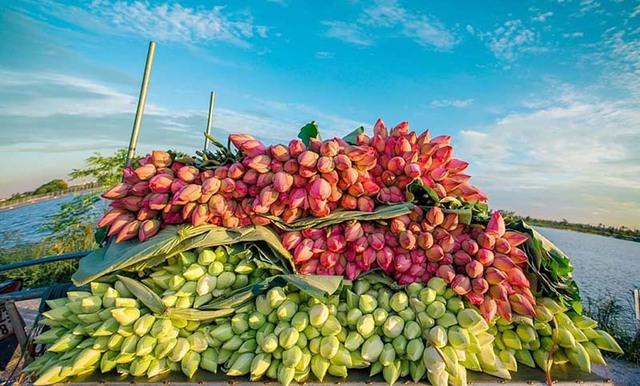 Kỷ lục triệu bông hoa sen của anh nông dân Hà Nội - Ảnh 7.