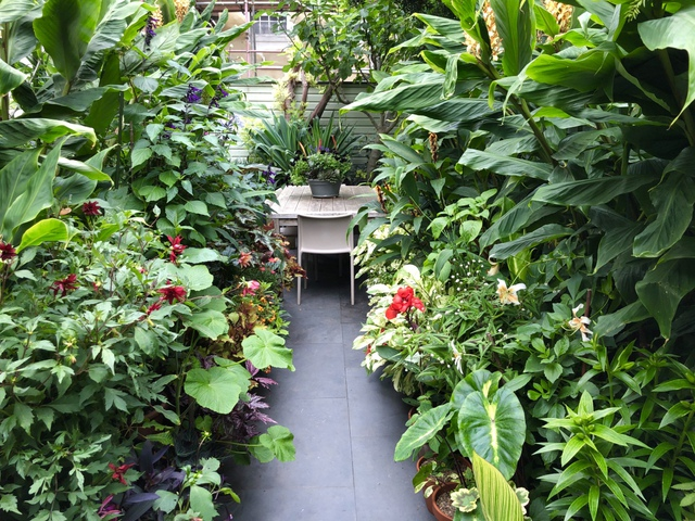 Khu vườn nhiệt đới với hàng nghìn loài thực vật sinh sống của cặp vợ chồng dành 25 năm để chăm sóc - Ảnh 1.