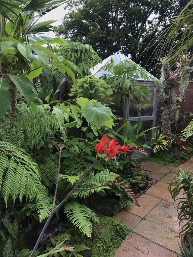 Khu vườn nhiệt đới với hàng nghìn loài thực vật sinh sống của cặp vợ chồng dành 25 năm để chăm sóc - Ảnh 12.