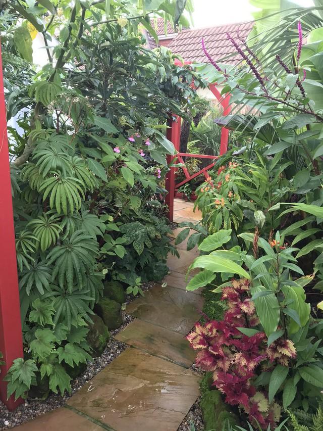 Khu vườn nhiệt đới với hàng nghìn loài thực vật sinh sống của cặp vợ chồng dành 25 năm để chăm sóc - Ảnh 15.