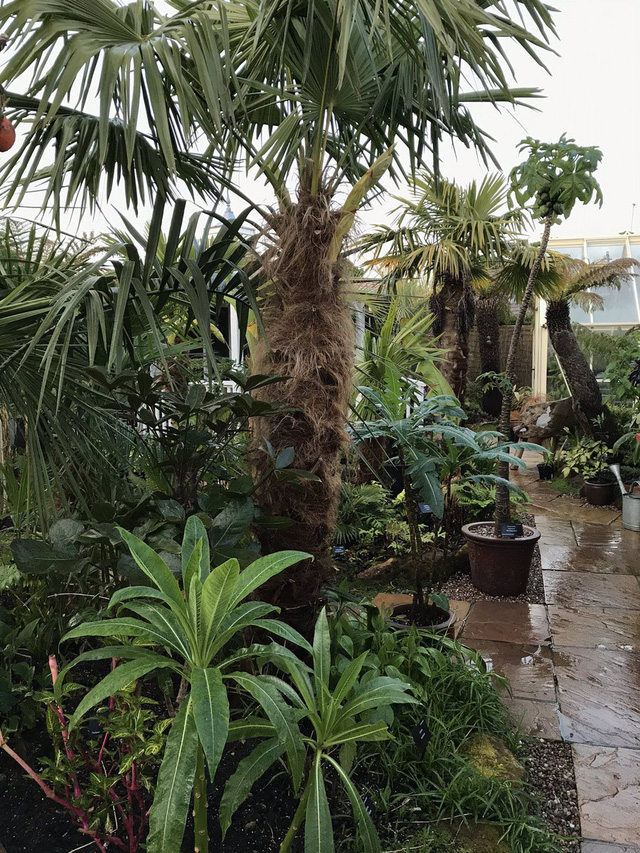 Khu vườn nhiệt đới với hàng nghìn loài thực vật sinh sống của cặp vợ chồng dành 25 năm để chăm sóc - Ảnh 4.