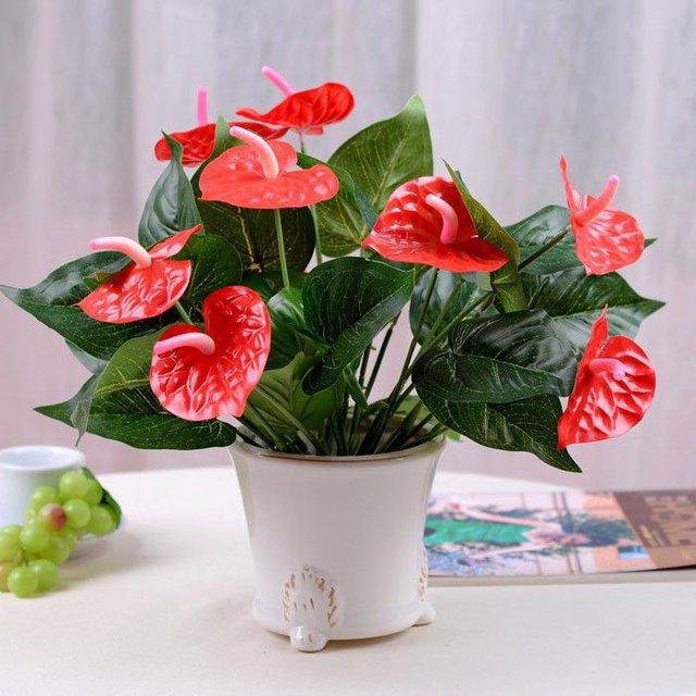 Ý nghĩa và cách chăm sóc cây hồng môn trong phong thủy để tốt cho gia đình - Ảnh 4.