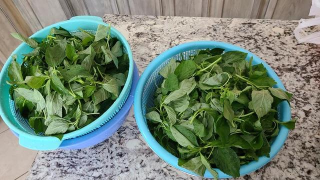 Rau tươi bảo quản theo cách này, để cả năm vẫn như vừa mới hái, mùa đông thèm bát canh rau trái mùa vẫn dễ dàng - Ảnh 3.