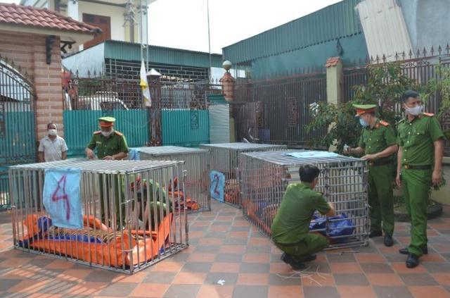 Bên trong hầm nuôi 17 con hổ ở Nghệ An