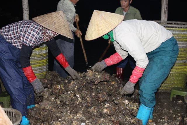 کوانگ نینگ: صدف شیر برای شیر کاهش می یابد به دلیل همه گیری COVID -19 ، ماهیگیران سفید در شب درو می کنند - عکس 8.