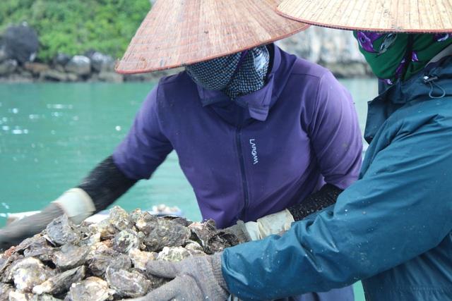 کوانگ نینگ: قیمت صدف به دلیل همه گیری کووید -19 کاهش یافته است ، ماهیگیران سفیدپوست در شب جمع شدند - عکس 9.