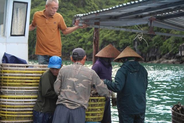 کوانگ نینگ: قیمت صدف ها به دلیل همه گیری کووید -19 کاهش یافته است ، ماهیگیران سفیدپوست در شب جمع شدند - عکس 10.