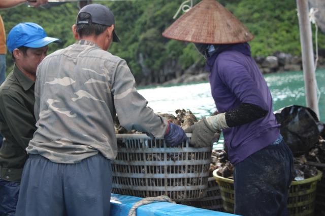 کوانگ نینگ: قیمت صدف به دلیل همه گیری کووید -19 کاهش یافته است ، ماهیگیران سفیدپوست در شب جمع شدند - عکس 11.