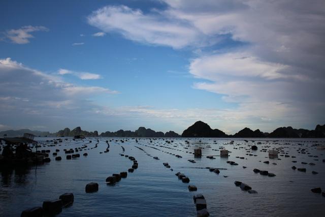 کوانگ نینگ: صدف های شیر به دلیل شیوع COVID -19 کاهش می یابد ، ماهیگیران سفید در شب برداشت می کنند - عکس 1.