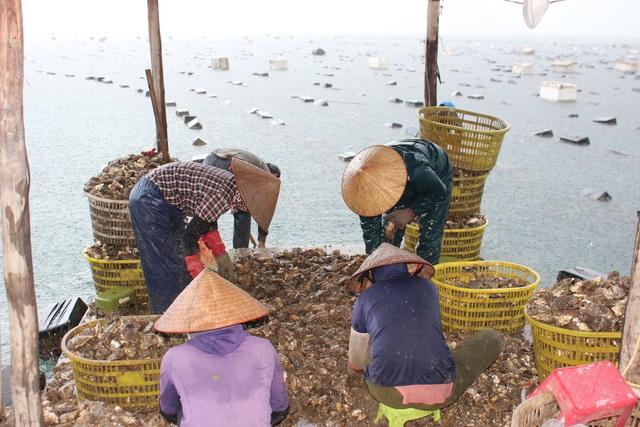 کوانگ نینگ: قیمت صدف ها به دلیل همه گیری کووید -19 کاهش یافته است ، ماهیگیران سفیدپوست در شب جمع شدند - عکس 12.