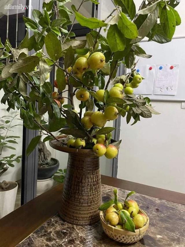 Cành táo mèo trĩu quả được chị em Hà Thành mua về cắm, vừa ngắm vừa ăn, tiểu thương cháy hàng không có bán - Ảnh 1.