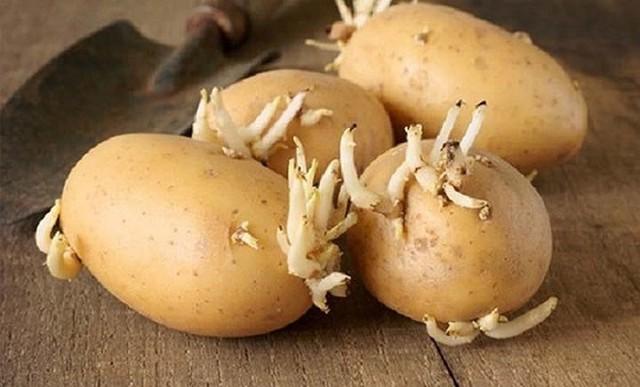 Khoai tây sẽ cực tốt nếu bạn tránh được 4 sai lầm phổ biến này - Ảnh 5.