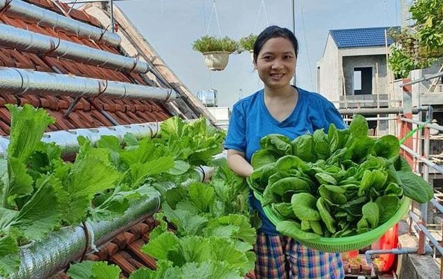 Vườn rau sạch của cô giáo Thái Bình ngay trên mái nhà khiến dân mạng thích mê - Ảnh 1.