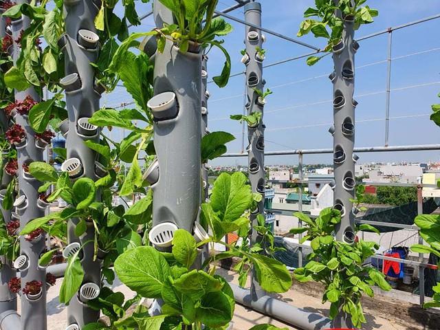 Vườn rau sạch của cô giáo Thái Bình ngay trên mái nhà khiến dân mạng thích mê - Ảnh 5.