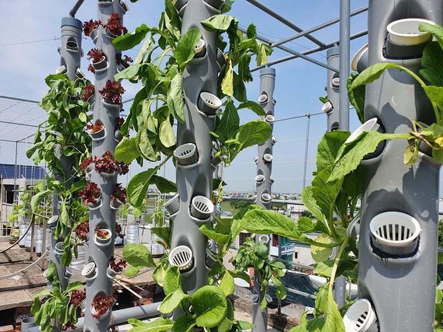 Vườn rau sạch của cô giáo Thái Bình ngay trên mái nhà khiến dân mạng thích mê - Ảnh 6.