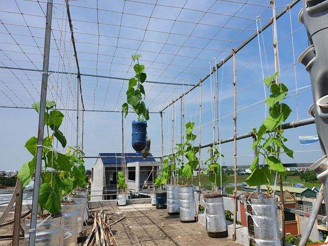 Vườn rau sạch của cô giáo Thái Bình ngay trên mái nhà khiến dân mạng thích mê - Ảnh 7.