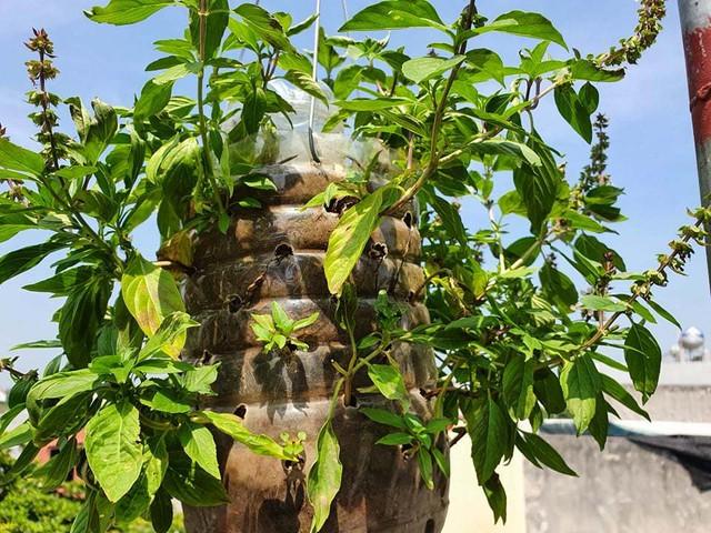 Vườn rau sạch của cô giáo Thái Bình ngay trên mái nhà khiến dân mạng thích mê - Ảnh 8.