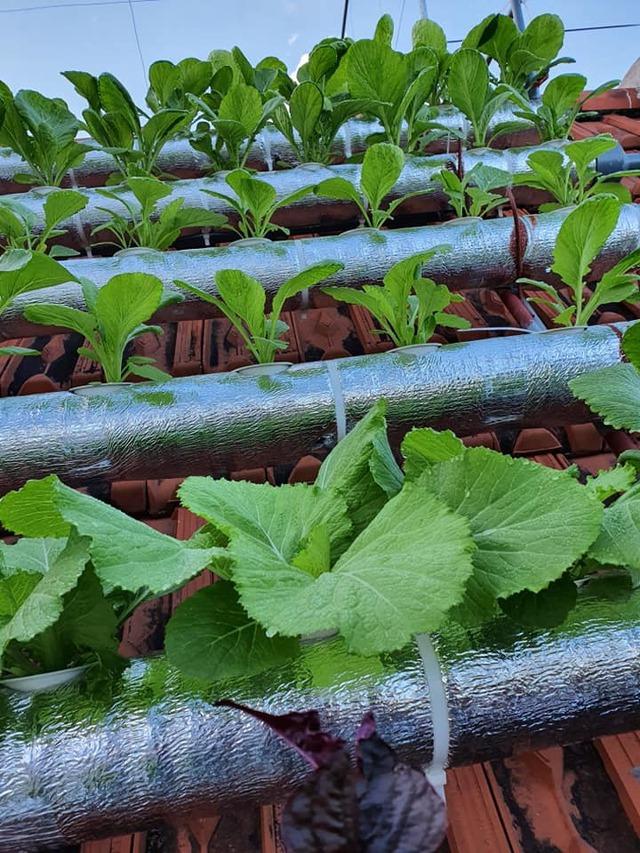 Vườn rau sạch của cô giáo Thái Bình ngay trên mái nhà khiến dân mạng thích mê - Ảnh 9.