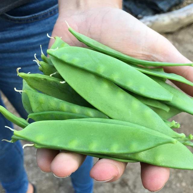 4 loại rau củ nghe tên thì rất quen thuộc nhưng nhà không có điều kiện thì đừng nghĩ đến việc mua ăn hằng ngày - Ảnh 5.