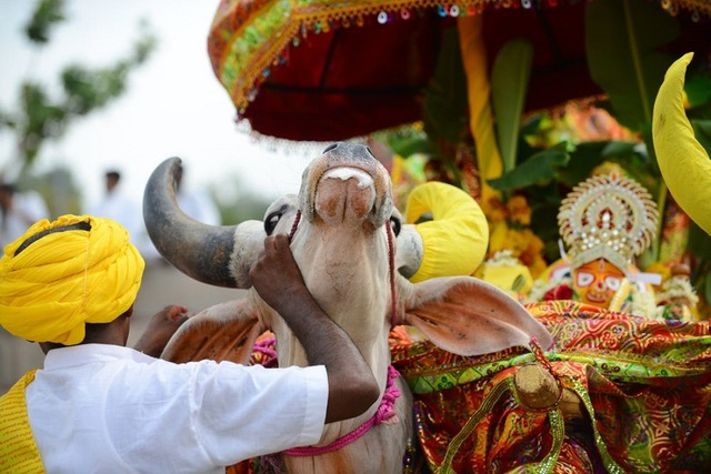 3.000 người dân Ấn Độ tới dự tang lễ một con bò - Ảnh 1.