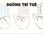 Tự xem số phận mình qua bàn tay: Đường trí tuệ trong lòng bàn tay nói gì về bạn?