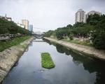 Giấc mơ phát triển du lịch trên sôngTô Lịch?!