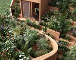 Cặp vợ chồng già sở hữu một vườn rau lớn trên mái nhà khiến ai thấy đều phải xuýt xoa