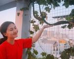 Ngọc Lan và Thanh Bình từng khiến người người ghen tỵ khi cùng nhau thu hoạch rau ở 'nông trại' trên sân thượng mà giờ đã đường ai nấy đi