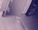 """Chủ nhà phát hiện """"hồn ma"""" của em bé và thú cưng qua camera"""